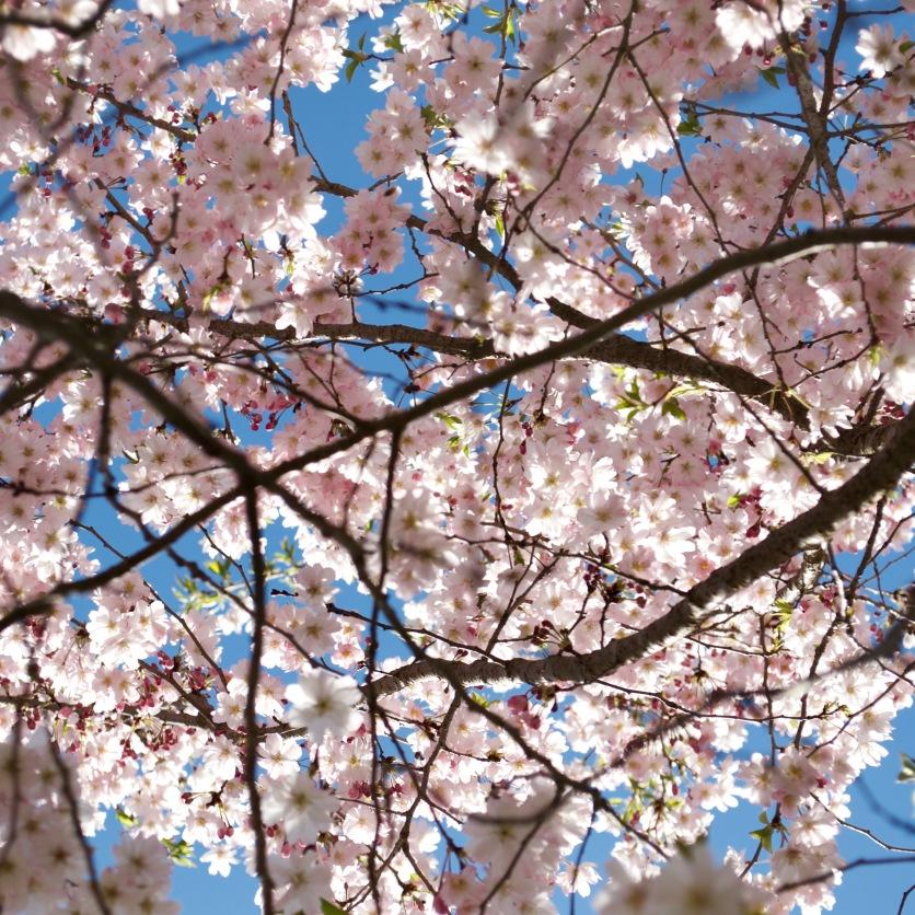London, Ontario in bloom.